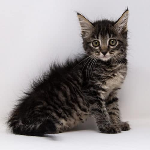 Valentina – Adopted