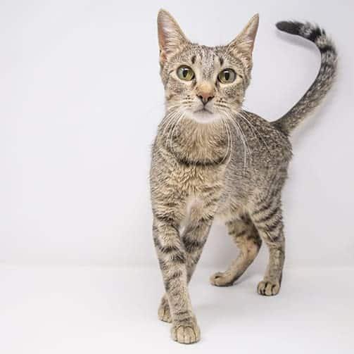 Kara – Adopted