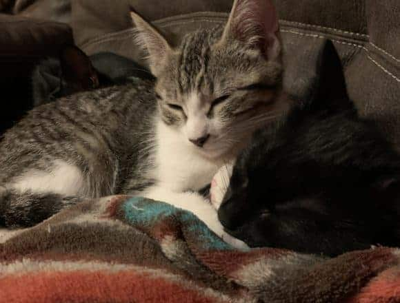 Tikanen – Adopted