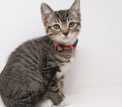 Cumin – Adopted