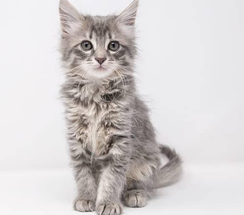 Danvers – Adopted