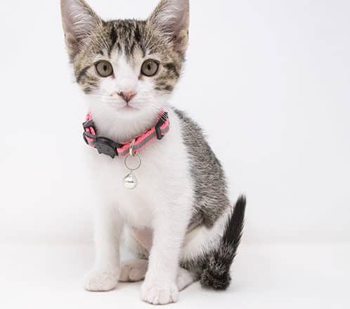 Marjoram – Adopted