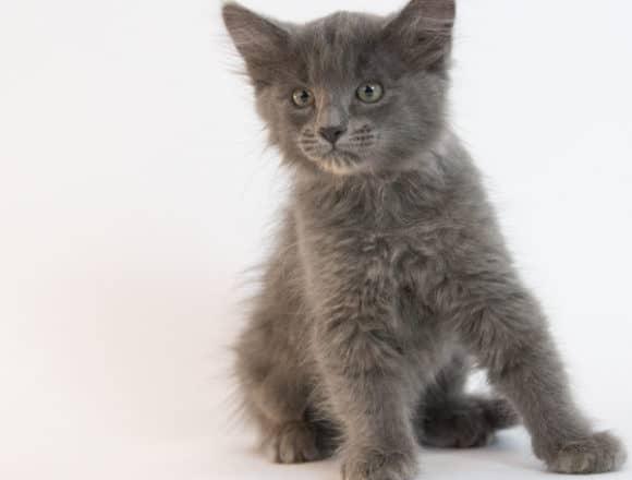 Joshauna – Adopted