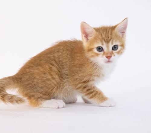 Patel – Adopted