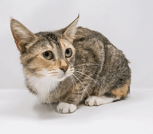 Ramona-Adopted
