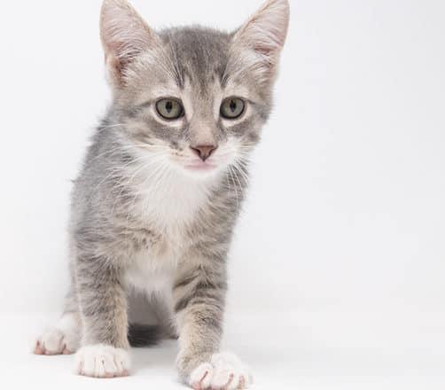Sox – Adopted