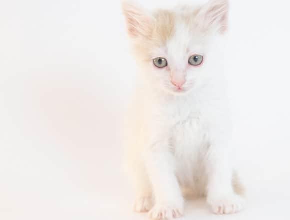 Hylia – Adopted