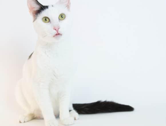 Navi – Adopted