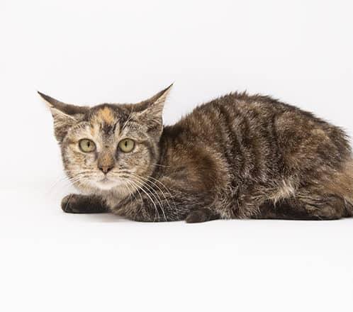 Tandoori – Adopted