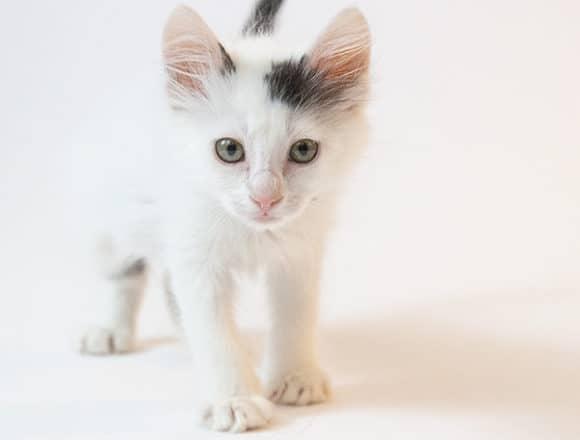 Walsh – Adopted