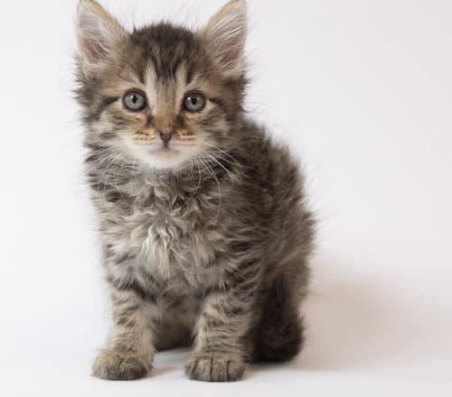 Sirius – Adopted