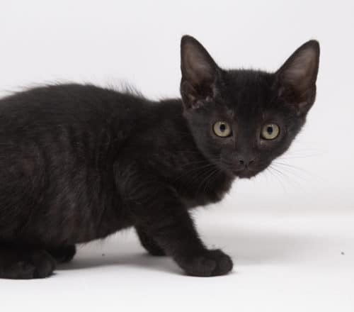 Black Pearl – Adopted