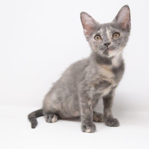 Cat-lyn