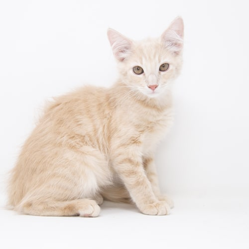 Chuundar – Adopted
