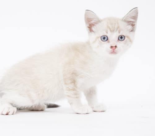 Kestrel – Adopted