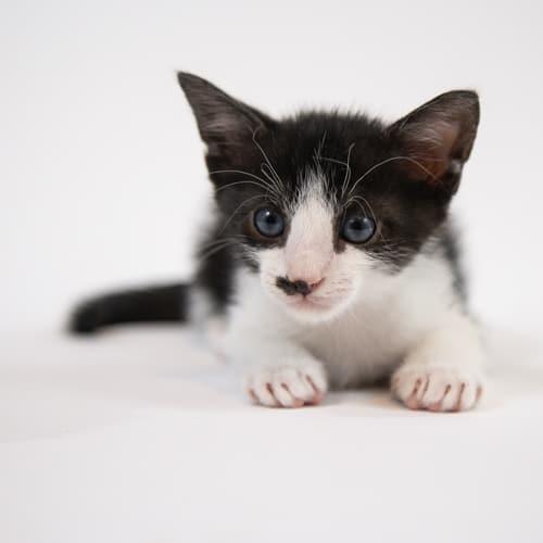 Mr Meow Stache