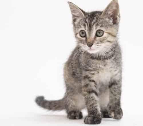 Niihau (Ni'i) -Adopted
