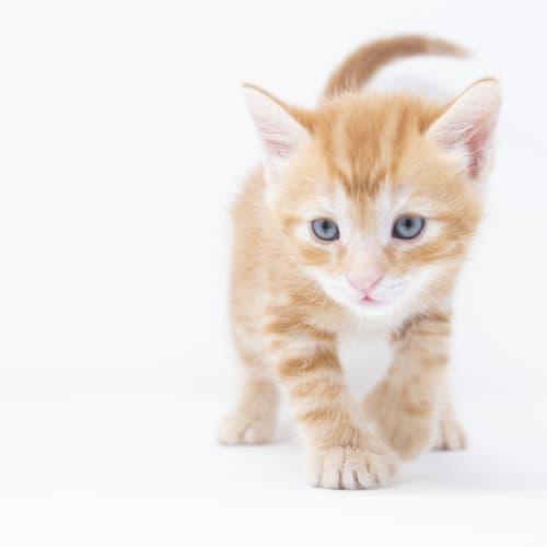Pico de gato- Adopted