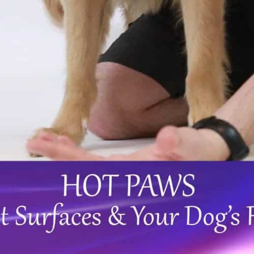 Hot Paws – Hot Surfaces & Your Dog's Feet