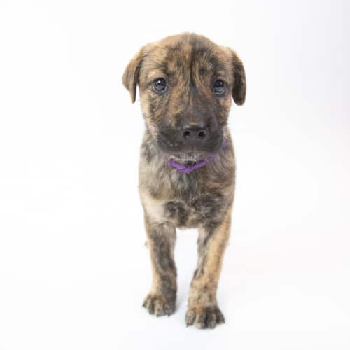 Echo – Adopted