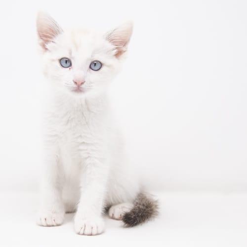 Astin – Adopted
