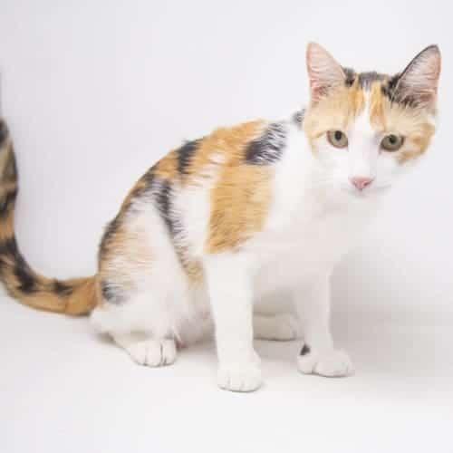 Becca – Adopted