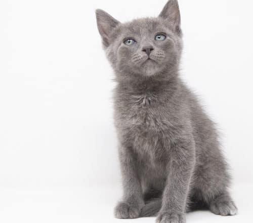 Mercutio – Adopted