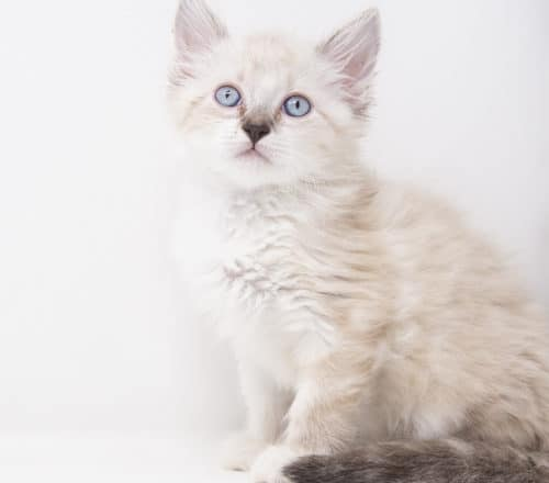 Porche – Adopted