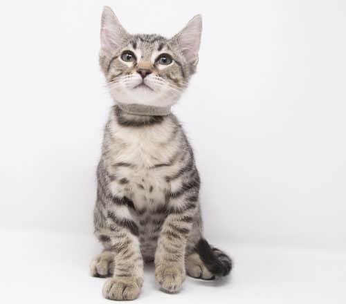 Sambora – Adopted