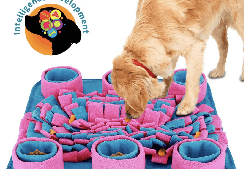 Puppy Food-Puppy Products and Tips