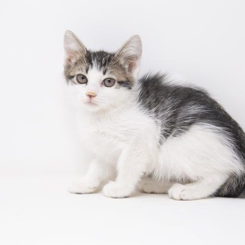 Gouda – Adopted
