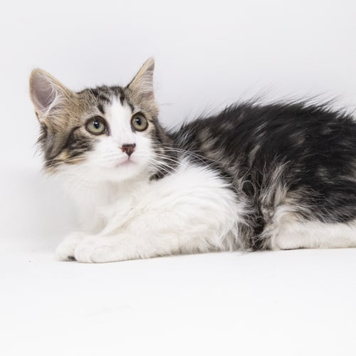 Miguel – Adopted