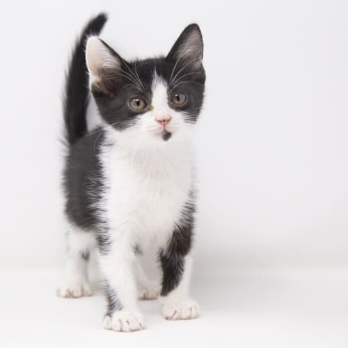 Pepper-Jack – Adopted