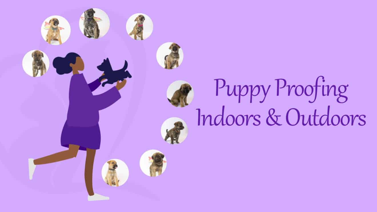 Puppy Proofing - Inside and Outside Your Home