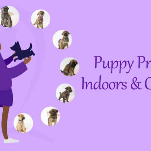 Puppy Proofing – Inside and Outside Your Home