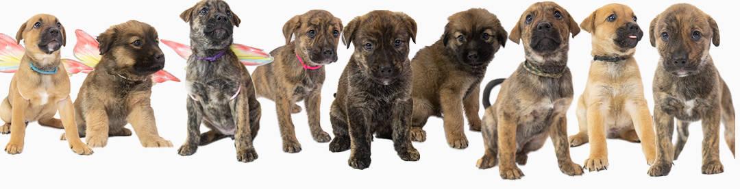 Top Gun Puppies