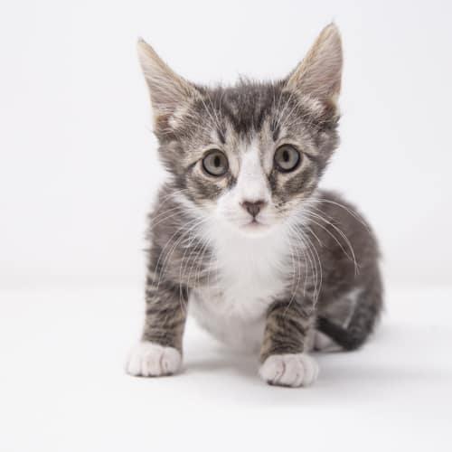 Nano – Adopted
