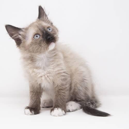 Krita – Adopted
