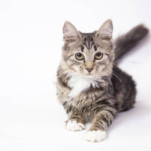 Laurel – Adopted