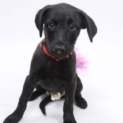 Demeter – Adopted