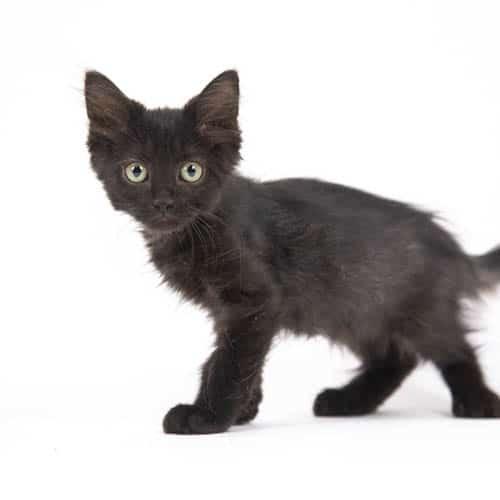 Squash – Adopted