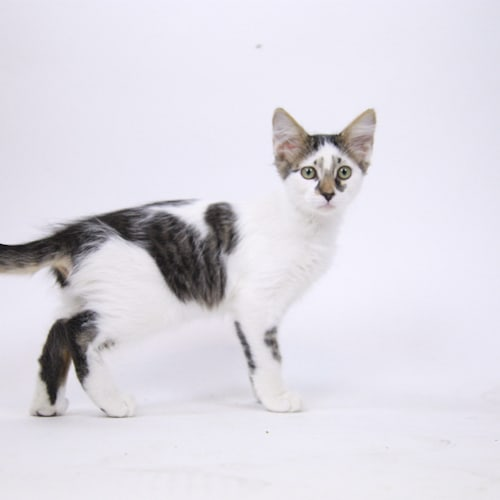 Ozzy – Adopted