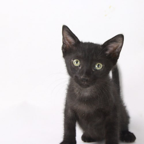 Toothless – Adopted