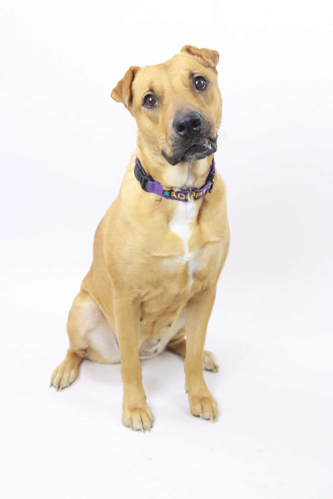 Maggie – Adopted
