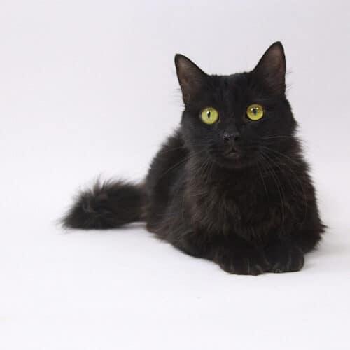 Shiva – Adopted