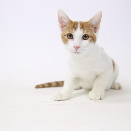 Cream of Tartar – Adopted