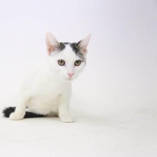 Ghostie – Adopted