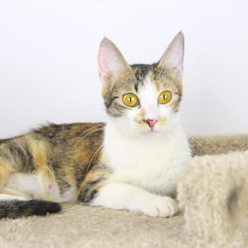 Hetty – Adopted