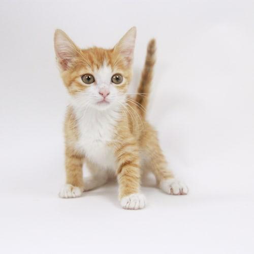 Kensie – Adopted