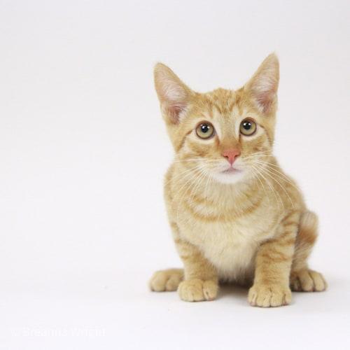 Arastoo – Adopted
